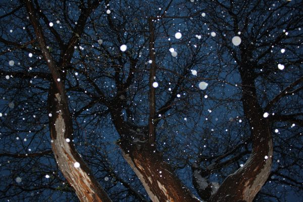 Tree from Below with Falling Snow - Free High Resolution Photo