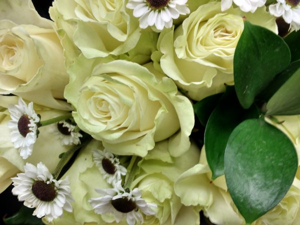 White Roses and Daisies - Free High Resolution Photo