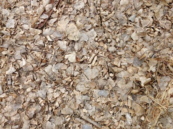 Dead Leaves Texture - Free High Resolution Photo