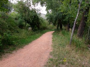Dirt Path through Wooded Area - Free High Resolution Photo