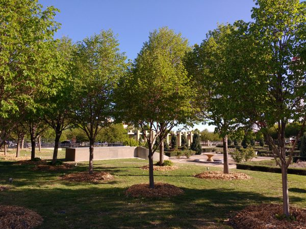 Trees with Mulch around their Trunks - Free High Resolution Photo