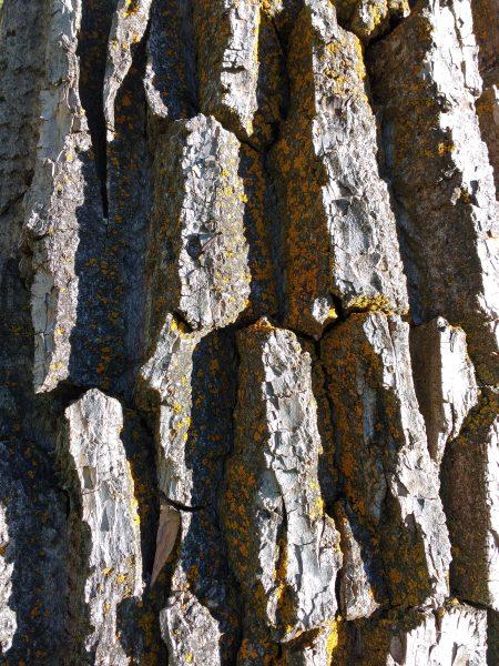 Tree Bark with Orange Lichen - Free High Resolution Photo