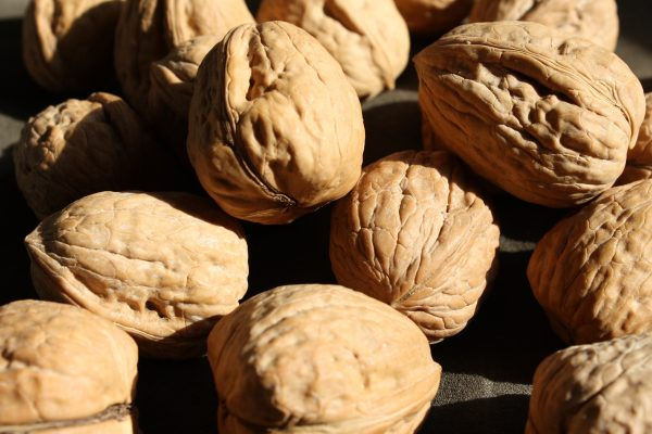 Walnuts in the Shell - Free High Resolution Photo