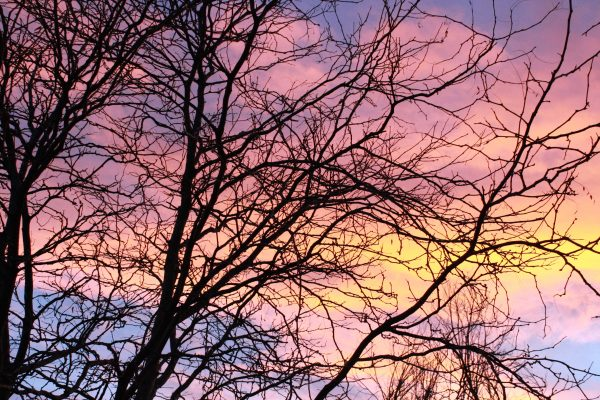 Pastel Sunset Through Tree Branches - Free High Resolution Photo