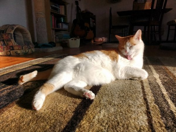 Orange and White Cat Bathing in a Sunbeam - Free High Resolution Photo