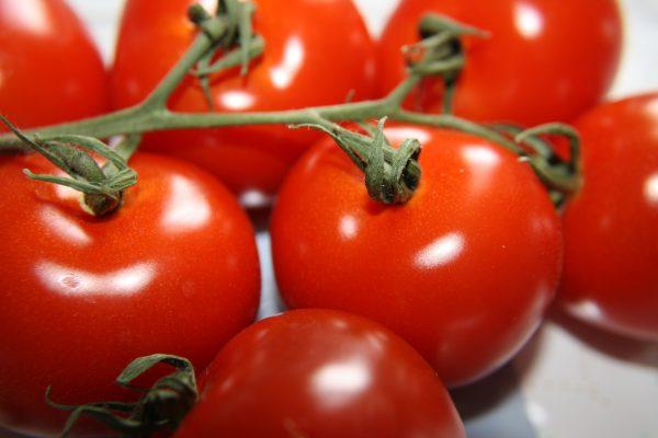 Vine Ripened Tomatoes - Free High Resolution Photo