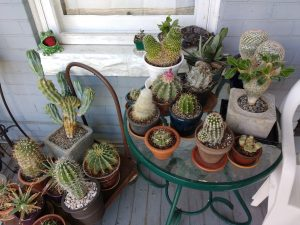 Collection of Cactus Plants - Free High Resolution Photo