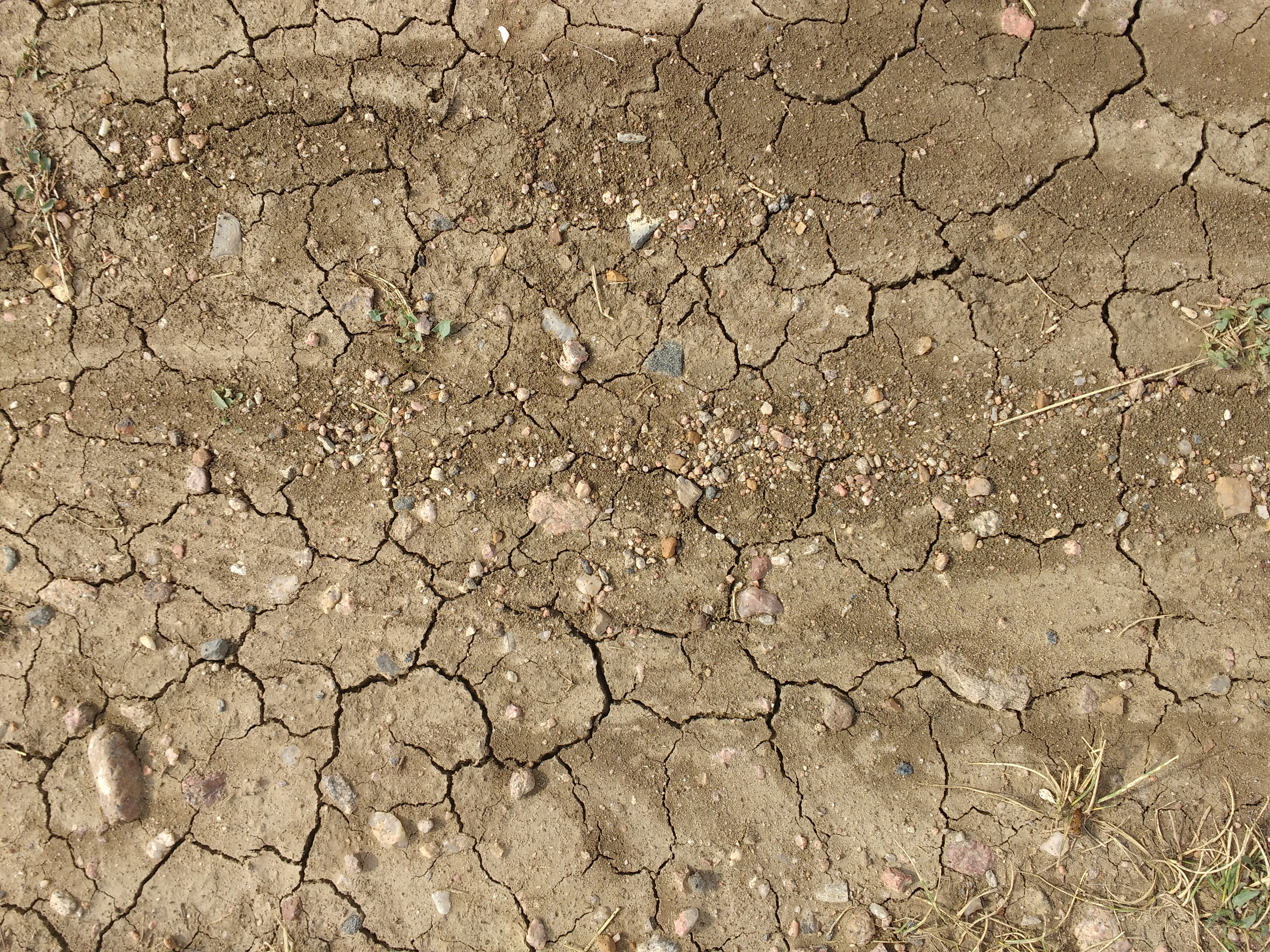 Dirt with Mud Cracks, Rocks, and Weeds Texture Picture ...