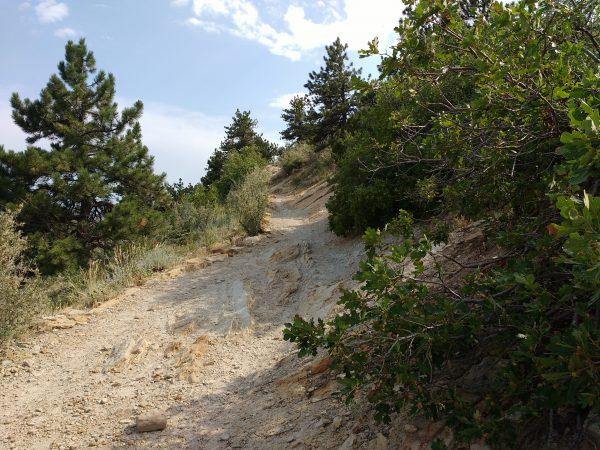 Hiking Trail - Free High Resolution Photo