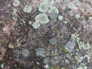 Lichen on Rock Face - Free High Resolution Photo