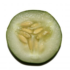 Cucumber Slice Close Up - Free High Resolution Photo