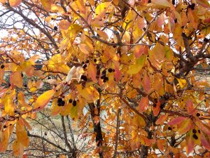 Autumn Leaves - Free High Resolution Photo