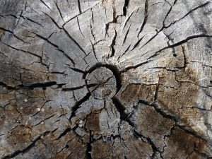 End of Old Wooden Stump - Free High Resolution Photo
