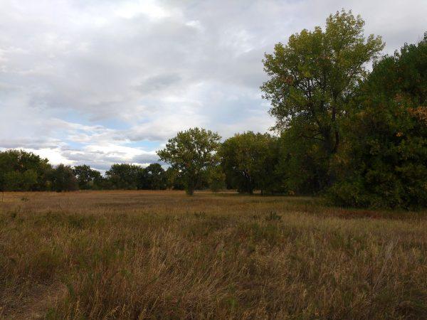 Meadow - Free High Resolution Photo