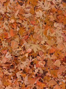 Fall Leaves on the Ground - Free High Resolution Photo