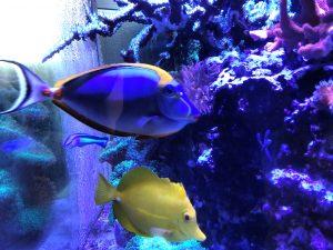 Tang Fish - Free High Resolution Photo
